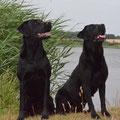 Coby und Brix