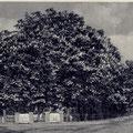 14_263_Stadtgarten in Hhlbg 1938, heute Freiheitstraße Ecke Preinstraße