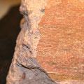 In der Nahaufnahme erkennt man die erhaltene Struktur.