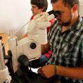 PRC, angestrengte Arbeit am Mikroskop
