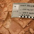 Fossilfund an der Gesteinsoberfläche
