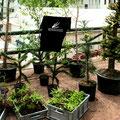 Nicht nur versteinerte Pflanzen! Nun auch lebendes Grün: Insgesamt rund 1700 Pflanzen!!!