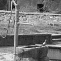Eine Taube am Brunnen lässt sich gern fotografieren