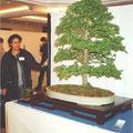Maureen neben einem etwas größeren Bonsai