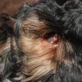 Aération des oreilles, photo F.O