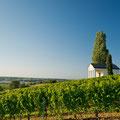 Von Reben umschlungen - Weintempel Edenkoben (Copyright/Fotograf: Rheinland-Pfalz Tourismus, Dominik Ketz)