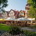 Weinreihe Bad Sooden-Allendorf, © Stadt Bad Sooden-Allendorf