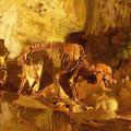 Die Bärenhöhle auf der Schwäbischen Alb gehört zu einer der meistbesuchten Höhlen Deutschlands (© Schwäbische Alb Tourismusverband)