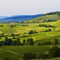 Landschaft Ballrechten-Dottingen © Werbegemeinschaft Markgräflerland GmbH