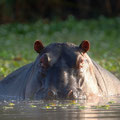 Faszinierende Tierwelt Südafrikas