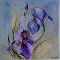12 - Les iris veloutés - huile sur bois 40x40