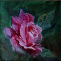 89 - Rose rose - huile 10x10