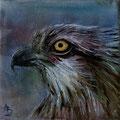 50 - Aigle balbuzard - huile 10x10