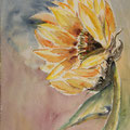 06 - Tournesol - aquarelle 40x30