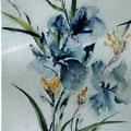 19 - Iris - aquarelle 40x30