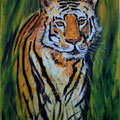 73 - Le tigre - huile 24x18
