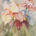 17 - Bouquet d'Iris - aquarelle 40x30