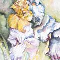 4 - Triplette d'iris - aquarelle 40x30