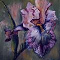 21 - Volants d'iris - huile sur bois 24x18