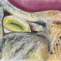 09 - Oeil de chat - pastel 30x40