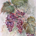 19 - Grappes de raisin - aquarelle 40x30