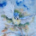 11 - L'envol de la mésange bleue - aquarelle 40x30