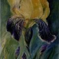 29 - Les iris - huile 35x24
