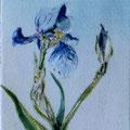 12 - Bouquet - huile 7x5