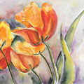 9 - Grosses Tulipes - aquarelle 30x40