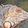 15 - L'oeil de l'iguane - aquarelle 30x40