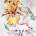 D 5 - Iris - aquarelle 40x30