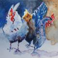13 - Belles cocottes - aquarelle inspirée de Maryse de May 40x30