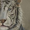 22 - Le tigre de Sibérie - pastel 40x30