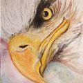 12 - L'oeil d'aigle - aquarelle 40x30