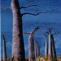 1 - Les baobabs - huile 61x46