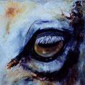 D 74 - L'oeil du cheval - huile 50x50