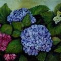 7 - Hortensias bleus et roses - huile 32x41