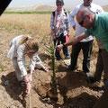 plantation d'un palmier dans la vallée du Jourdain