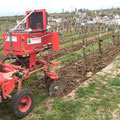 Domaine des Damoiselles viticulture biologique