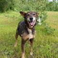B U N I A - liebes, altes Mix-Mädchen, geboren 2001, 50 cm  -  seit 12 Jahren im Tierheim - sucht Altersruhesitz