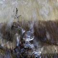 Wassertropfen - Huder Klosterbach. Theo Stenert