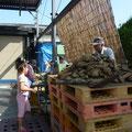 芋処理の風景。娘さんの桜子ちゃんが見守る