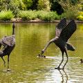 Cherchez les oiseaux !!! Jardin Anglais (2010-05)
