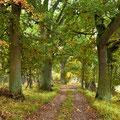 Forstweg durch den Eichenwald im Mürutz N.P.