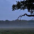 Morgengrauen im Müritz Nationalpark