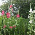 Et les fleurs d'été...