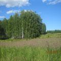 На лесной опушке. Фото Инны Балакиной (с.Фокино)