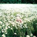 Ромашковое поле. Фото Битуновой Нины Петровны (п.Васильсурск)