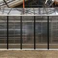 Gewächshaus: Asteria 27 (306 x 681 cm), 12 mm Platten