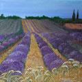 © Mitten im Lavendelfeld  in Öl  50x70cm      2850€